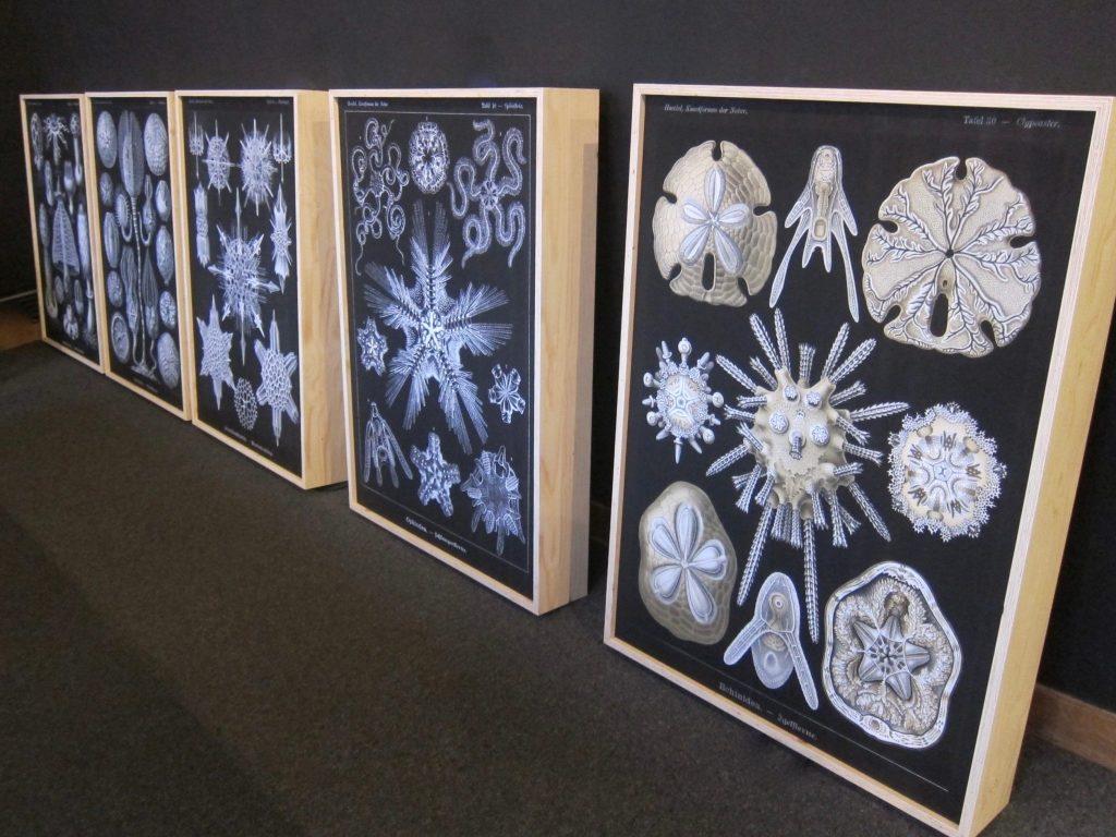 Lichtobjecten. Prints op textiel, 'Kunstformen der Natur' van Ernst Haeckel
